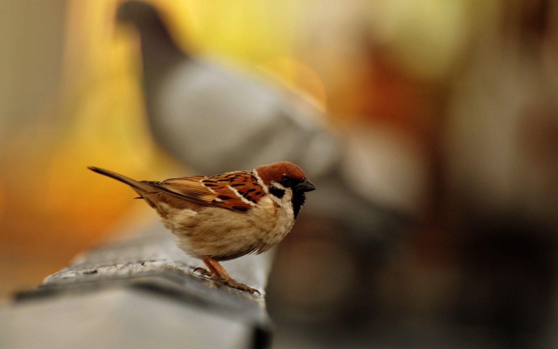 Belajar Tawakkal Dari Seekor Burung
