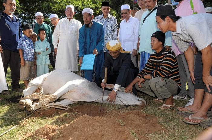 Image result for ibadah qurban