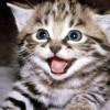 Masuk Neraka Gara-gara Seekor Kucing [ www.Bacaan.ME ]
