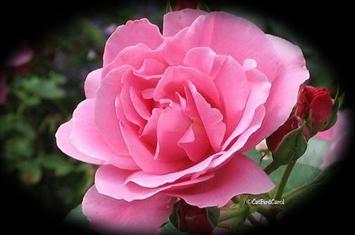 http://www.voa-islam.com/timthumb.php?src=/photos/mumtaz/flower-bunga.jpg&h=235&w=355&zc=1
