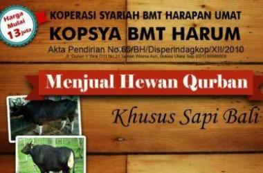 Inilah Daftar Harga Hewan Kurban Sapi Bali di BMT Harum